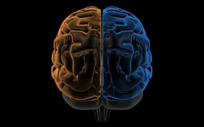 The Creeping Paradigm Shift in Psychotherapy Part 4: Brain Systems and Functions – The Hemispheres