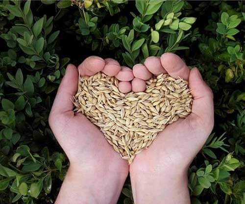 hands holding grains