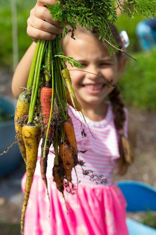 girl holding fresh picked carrots
